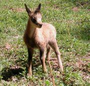 La fauna del valle del Aragón en imágenes